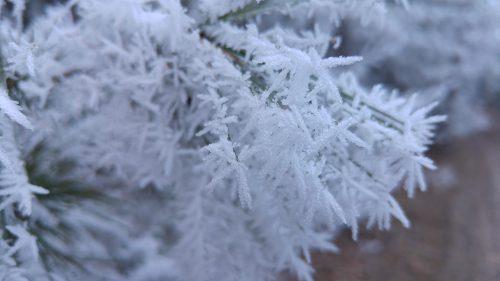 Zimní příroda www.KladrubskePolabi.cz